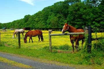 Horse Owner Needs